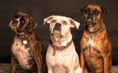 Leitfaden für das Beherbergen von Haustieren in Ihrem Ferienhaus